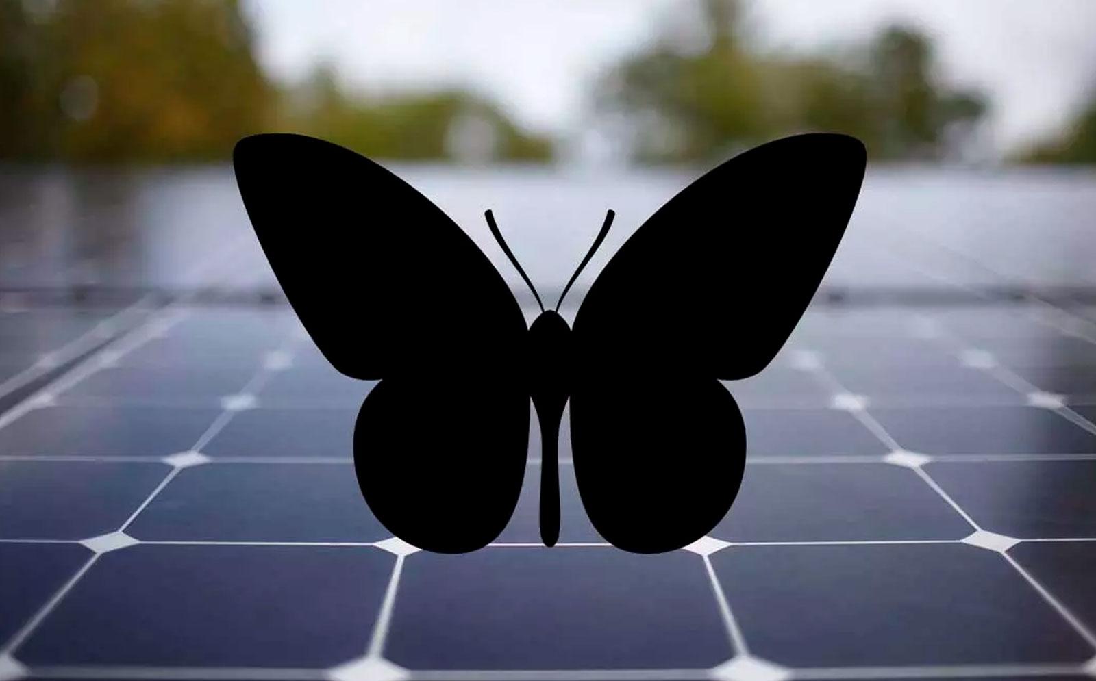 Crean nuevos paneles solares inspirados en mariposas